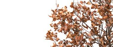Fermez-vous vers le haut des morts d'arbre Photos libres de droits