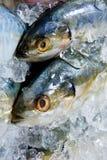 Fermez-vous vers le haut des poissons frais de maquereau Image libre de droits