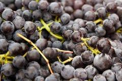 Fermez-vous vers le haut des raisins Photos libres de droits