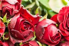 Fermez-vous vers le haut des roses rouges et du fond naturels de baisses de l'eau employant en tant que fond de jour de valentine Photographie stock