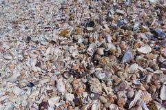 Fermez-vous vers le haut des seashells Coraux et cailloux sur la plage image libre de droits