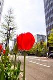 Fermez-vous vers le haut des tulipes rouges dans la ville Photo stock