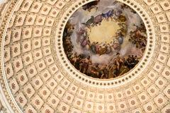 Fermez-vous vers le haut des USA intérieurs Capito Photographie stock libre de droits