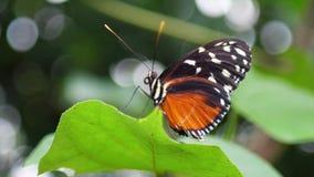 Fermez-vous vers le haut du beau papillon se reposant sur l'usine clips vidéos