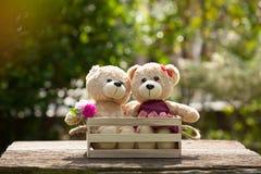 Fermez-vous vers le haut du bel ours de nounours du brun deux dans le concept de boîte en bois, amour Images libres de droits