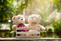 Fermez-vous vers le haut du bel ours de nounours du brun deux dans le concept de boîte en bois, amour Photo libre de droits
