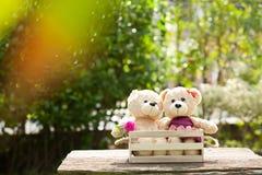 Fermez-vous vers le haut du bel ours de nounours du brun deux dans le concept de boîte en bois, amour Photos libres de droits