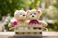 Fermez-vous vers le haut du bel ours de nounours du brun deux dans le concept de boîte en bois, amour Photographie stock