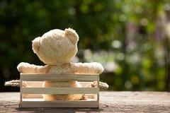 Fermez-vous vers le haut du bel ours de nounours dans la boîte en bois, concept au sujet de loneline Image libre de droits