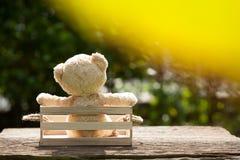 Fermez-vous vers le haut du bel ours de nounours dans la boîte en bois, concept au sujet de loneline Images stock