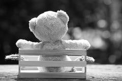 Fermez-vous vers le haut du bel ours de nounours dans la boîte en bois, concept au sujet de loneline Images libres de droits