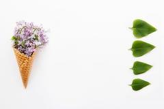 Fermez-vous vers le haut du bouquet des fleurs lilas pourpres dans le cône de gaufre et cru des feuilles vertes sur le fond blanc Images stock
