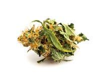 Fermez-vous vers le haut du bourgeon médical de marijuana d'isolement sur le fond blanc photographie stock