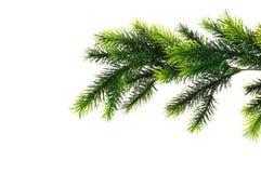 Fermez-vous vers le haut du branchement d'arbre de sapin Images libres de droits
