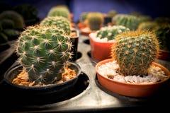 Fermez-vous vers le haut du cactus Photos libres de droits