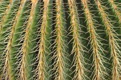 Fermez-vous vers le haut du cactus avec les pointeaux jaunes Photographie stock libre de droits