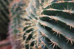 Fermez-vous vers le haut du cactus dans l'aménagement de désert Photo libre de droits