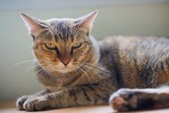 Fermez-vous vers le haut du chat Photo libre de droits