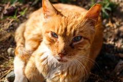 Fermez-vous vers le haut du chat Photographie stock libre de droits
