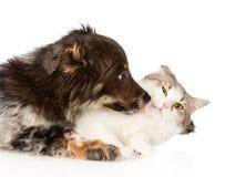Fermez-vous vers le haut du chat de baisers de chien D'isolement sur le fond blanc Photographie stock libre de droits