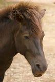 Fermez-vous vers le haut du cheval photographie stock libre de droits
