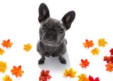 Fermez-vous vers le haut du chien curieux recherche Photo stock