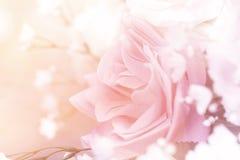 Fermez-vous vers le haut du concept doux d'amour de rose de rose Photos libres de droits