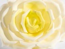 Fermez-vous vers le haut du détail d'une rose blanche et jaune Images stock