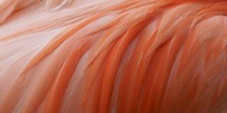 Fermez-vous vers le haut du flamant rose Images stock