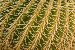 Fermez-vous vers le haut du fond de cactus Images libres de droits