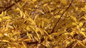 Fermez-vous vers le haut du fond de feuilles d'automne Images libres de droits