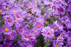 Fermez-vous vers le haut du fond de fleurs Photo libre de droits