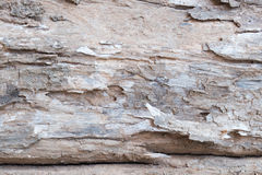 Fermez-vous vers le haut du fond en bois d'arbre de vieille écorce détails en bois de texture de ride Photo stock