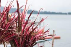 Fermez-vous vers le haut du fond floral de fleur colorée, jardin extérieur Île tropicale de Bali, Indonésie Photos libres de droits