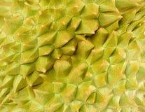 Fermez-vous vers le haut du fond mûr frais délicieux de durian image stock