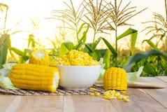 Fermez-vous vers le haut du maïs bouilli sur la table en bois photo libre de droits