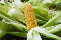 Fermez-vous vers le haut du maïs sur la peau de maïs Image stock