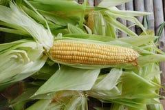 Fermez-vous vers le haut du maïs sur la peau de maïs Photos stock