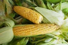 Fermez-vous vers le haut du maïs sur la peau de maïs Photo stock