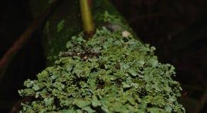 Fermez-vous vers le haut du macro tir du lichen vert - R-U images libres de droits