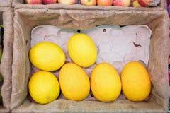 Fermez-vous vers le haut du melon jaune Images libres de droits