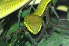 Fermez-vous vers le haut du mouchard vert principal dans le zoo photos stock