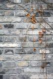 Fermez-vous vers le haut du mur de roche photographie stock libre de droits