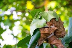 Fermez-vous vers le haut du nid avec la feuille sur le fond trouble de bokeh d'arbre dans le jardin feuille dans un domaine avec  Photos stock