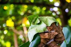 Fermez-vous vers le haut du nid avec la feuille sur le fond trouble de bokeh d'arbre dans le jardin feuille dans un domaine avec  Photo stock