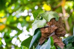 Fermez-vous vers le haut du nid avec la feuille sur le fond trouble de bokeh d'arbre dans le jardin feuille dans un domaine avec  Images stock