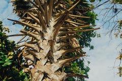 Fermez-vous vers le haut du palmier Image stock