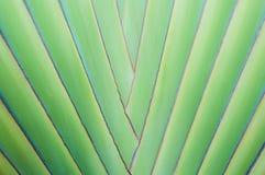 Fermez-vous vers le haut du palmier tropical Images stock