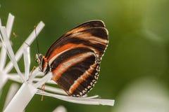 Fermez-vous vers le haut du papillon Photographie stock libre de droits