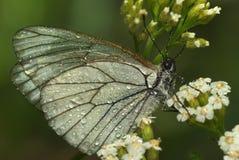 Fermez-vous vers le haut du papillon 2 Photographie stock libre de droits